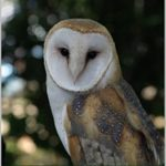 [PDF] [EPUB] OWL: A Winterling story about Fer and Rook Download