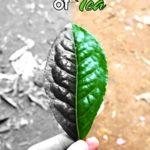 [PDF] [EPUB] The Wild Truth of Tea Download