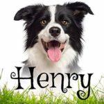 [PDF] [EPUB] Henry: A Pride and Prejudice Novella Download