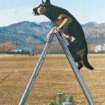 [PDF] [EPUB] Schutzhund: Theory and Training Methods Download
